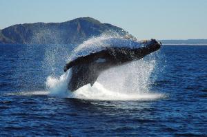 Grand Solmar Timeshare explores Cabo San Lucas